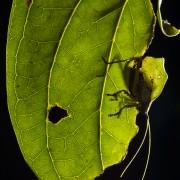 Typophyllum sp.