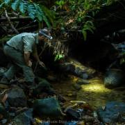 Emanuele Biggi looking for frogs at Kubah National Park