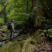 Emanuele Biggi exploring Poring Hot Springs forest (©Francesco Tomasinelli)