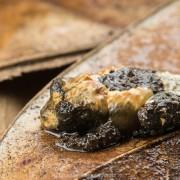Bird-poop frog Theloderma asperum