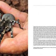 predatori-del-microcosmo-12