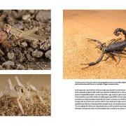 predatori-del-microcosmo-3