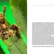 predatori-del-microcosmo-5