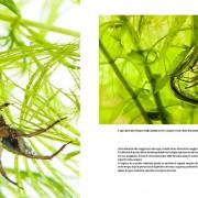 predatori-del-microcosmo-6